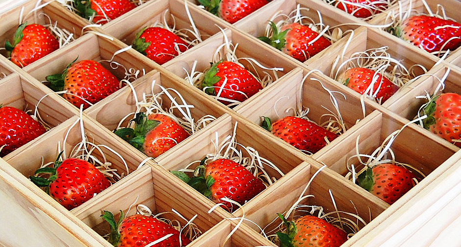 Maintaining the Optimal Environment for Growing Strawberries Year-round