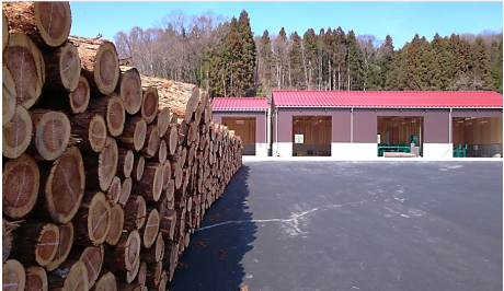 Timber and lumber processing plant