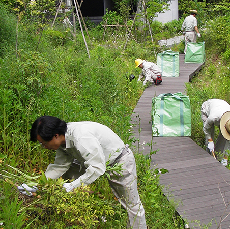 Researchers thinning the vegetation